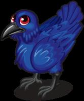 Dark raven single
