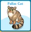 Pallas cat card
