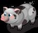 Pot Bellied Pig single