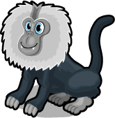 Lion tailed macaque single