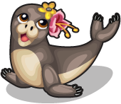 Luau monk seal single