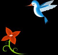 Elegant hummingbird an