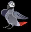 African grey parrot an