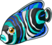 Emperor angelfish single