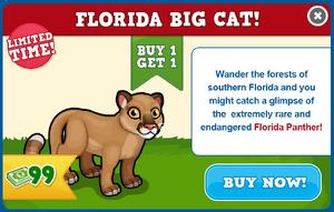 Florida panther modal