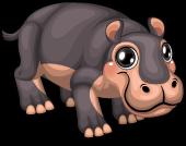 African hippo single