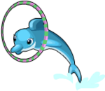 Circus dolphin an