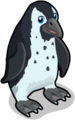 Black footed penguin