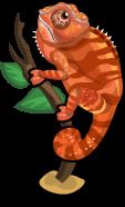 Panther Chameleon single