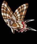 Zebra swallowtail butterfly (butterflies) static