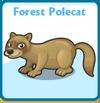 Forest polecat card
