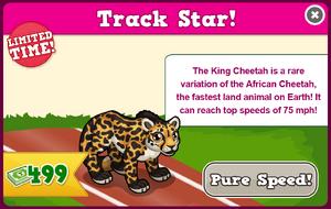 King cheetah modal