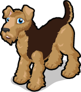 Airedale Terrier single