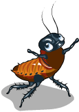 Hissing cockroach an