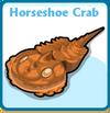 Horseshoe crab card