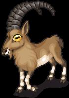 Alpine ibex single