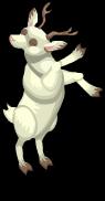 Albino deer an