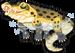 Saltwater crocodile single