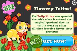 Tulip kitten modal