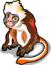 Red Colobus Monkey single