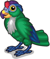 Green cheeked parrot single