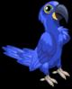 Hyacinth macaw single