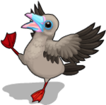 Red footed booby an