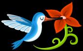 Elegant hummingbird single