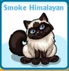 Smoke himalayan card