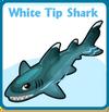 White tip shark card