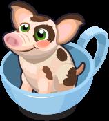 Teacup Pig single
