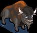 American Bison single