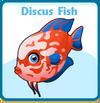 Discus fish card