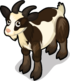 Fainting Goat single