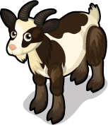Fainting Goat single