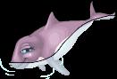 Harbor porpoise static
