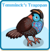 Temminck's tragopan card