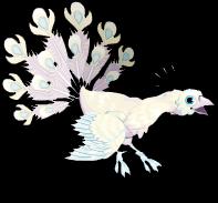 Bright albino peacock an