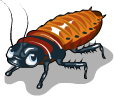 Hissing cockroach static