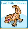 Leaf tailed gecko card