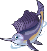 Sailfish single