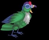 Green cheeked parrot an