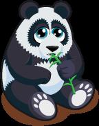 Panda Bear Single