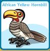 African yellow hornbill card