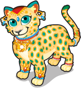 Indian leopard single