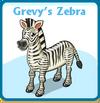 Grevy's zebra card