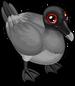 Lava gull single