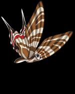 Zebra swallowtail butterfly (butterflies) an