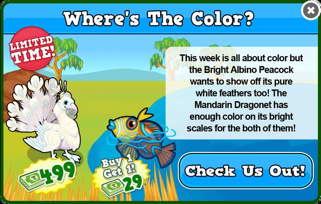 Bright albino peacock modal