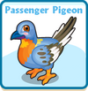 Passenger pigeon card